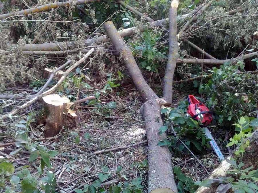 На Прикарпатті чоловік незаконно вирубував дерева та хотів відкупитися хабарем
